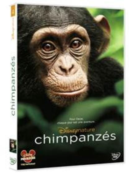 chimpanzes.002-copie-1